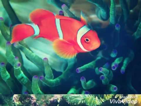 10 Самых красивых фото рыб ♥♥♥