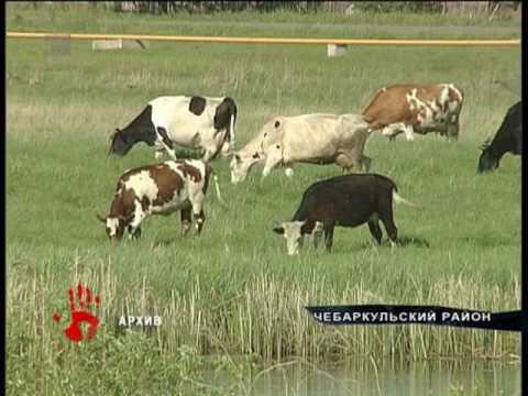 Сделал корове куни фото 147-312