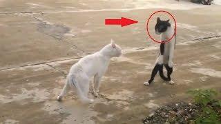 Приколы про животных!!!Смешное видео!!!Ржач до слёз)))Смотреть всем!!! часть 2