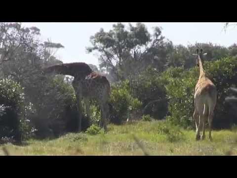 Niezwykly Swiat - RPA - Kragga Kamma Game Park
