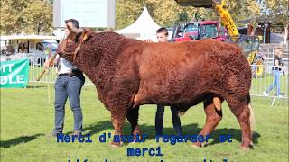concours nationale salers vichy 2017
