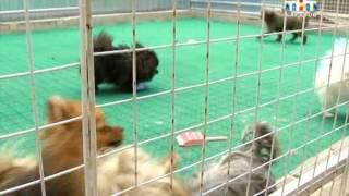 Саратовцы могут оставить своих питомцев в специальных гостиницах для животных