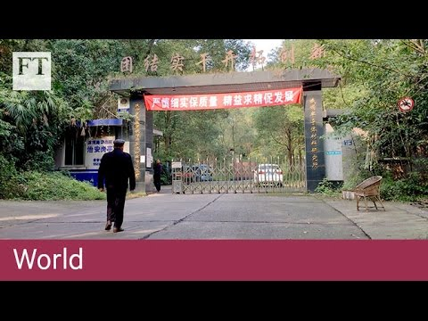 China's future economy: stagnation? | World