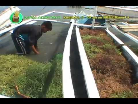 DA-BAR: Seaweed Industry of Region 5/Seaweed Showcase Community-based Participatory Action Research