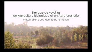 Élevage de volailles en agriculture biologique et en agroforesterie