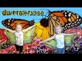 BUTTERFLY FESTIVAL KIDS visit a festival dedicated to all sorts of butterflies with Harzel