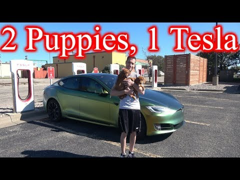 Tesla Road Trip for Puppies!