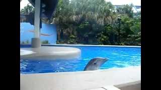 イルカの幸福度を測定。親しい人間と触れ合う時に一番幸せを感じていることが判明(フランス研究)