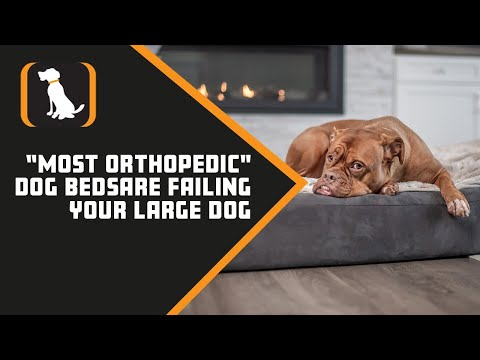 """new-experiment-proves-most-""""orthopedic""""-dog-beds-are-failing-your-large-dog"""