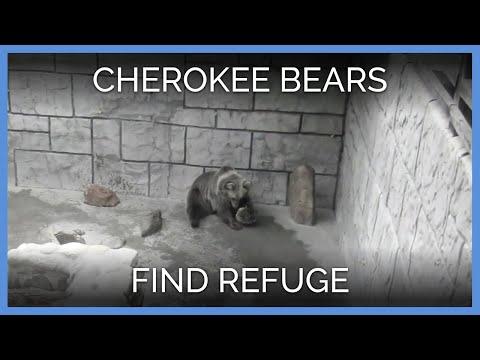 Cherokee Bears Find Refuge