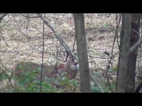 Ohio Whitetail 10-Point Buck