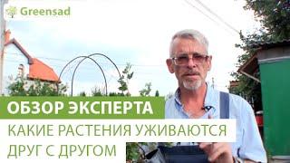 видео Какие растения можно сажать рядом, а какие нельзя (таблица)