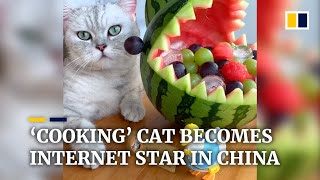 'Cooking' cat becomes internet star in China