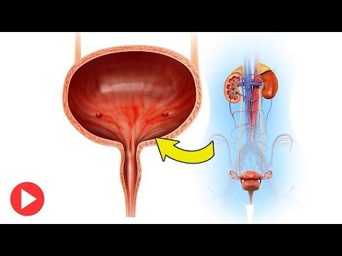 How To Treat Overactive Bladder Naturally: 10 Natural Tips To Help Treat Overactive Bladder from YouTube · Duration:  4 minutes 8 seconds