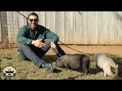 What It's Really Like Being A Pig Dad - The Asher House