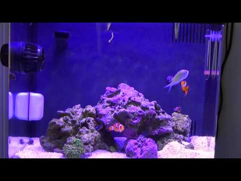 Setting up and cycling your BioCube 14gal