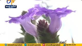 Kuruvanji Flowers Attracting Tourists  In Karnataka