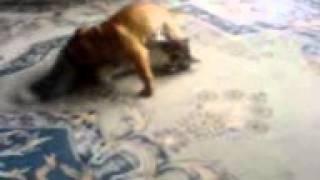 Кошки против собак. Бой за жизнь