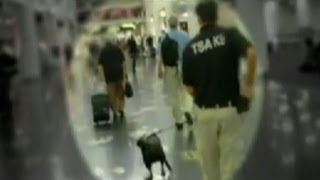 Airport Security: Bomb-Sniffing Dogs Report Says Dogs Can't Detect Bombs