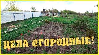 Дела огородные Экскурсия вокруг дома с Алевтиной Семья в деревне