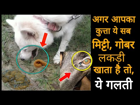 Dog care -   , ,  //        - dog eating grass or mud