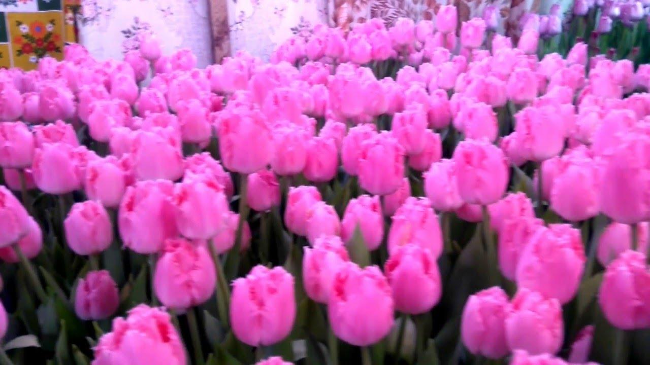 Оптом мы готовы предложить вам самые низкие цены в украине!. Оптом луковицы цветов отпускаются в фирменных (дышащих) коробках тюльпаны 50 шт/уп одного сорта, гиацинты 30 50 шт/уп, крокусы 150 шт/уп, лилии 10 шт/уп одного сорта. Большая луковица (максимальный размер, для выгонки).