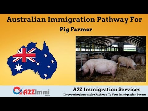 Pig Farmer | 2020 | PR / Immigration Requirements For Australia