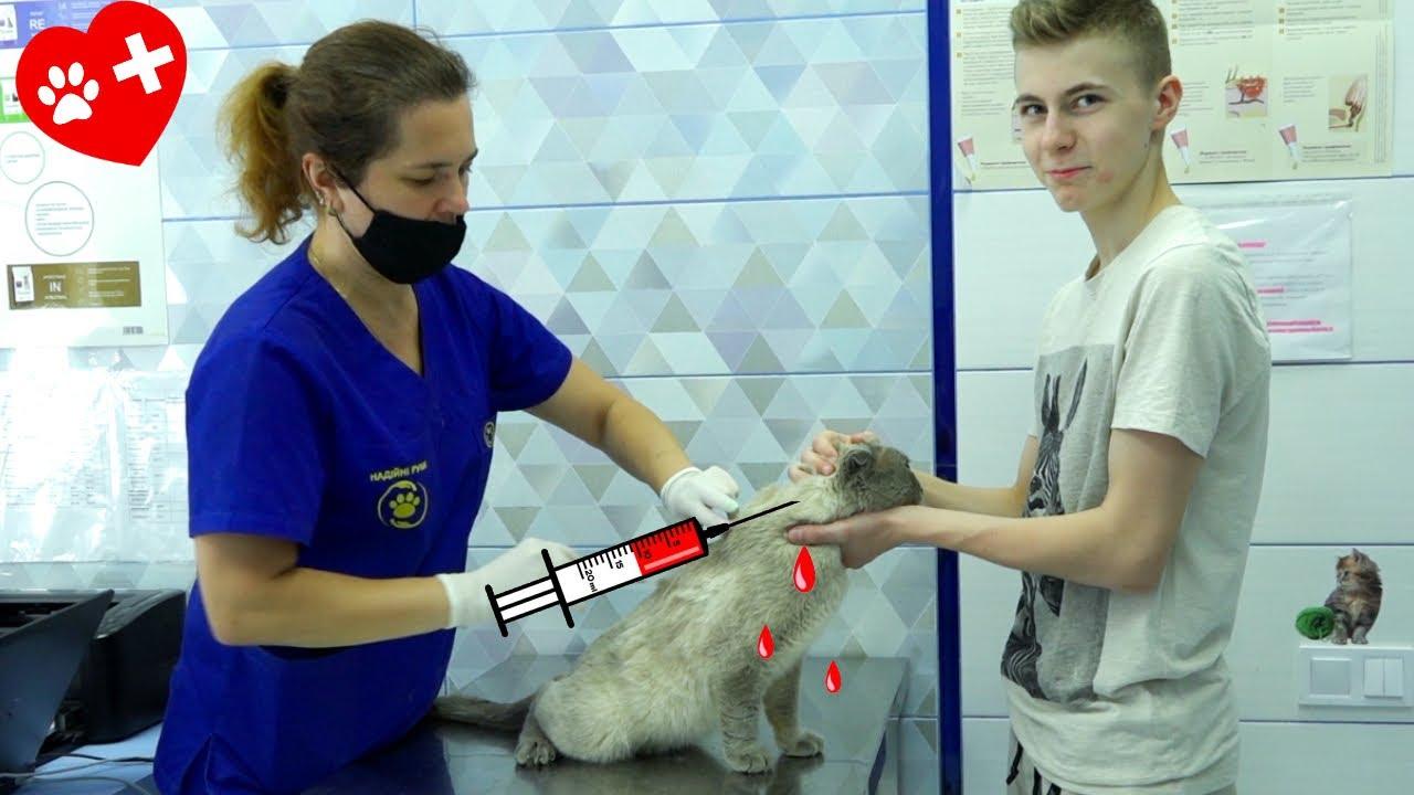 Делаем коту УКОЛЫ... ОСТАВИЛИ в клинике на 10 дней...
