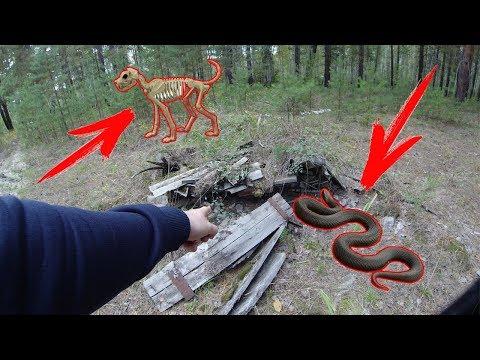 Вопрос: Как ходить за грибами обходя столкновения с змеями?