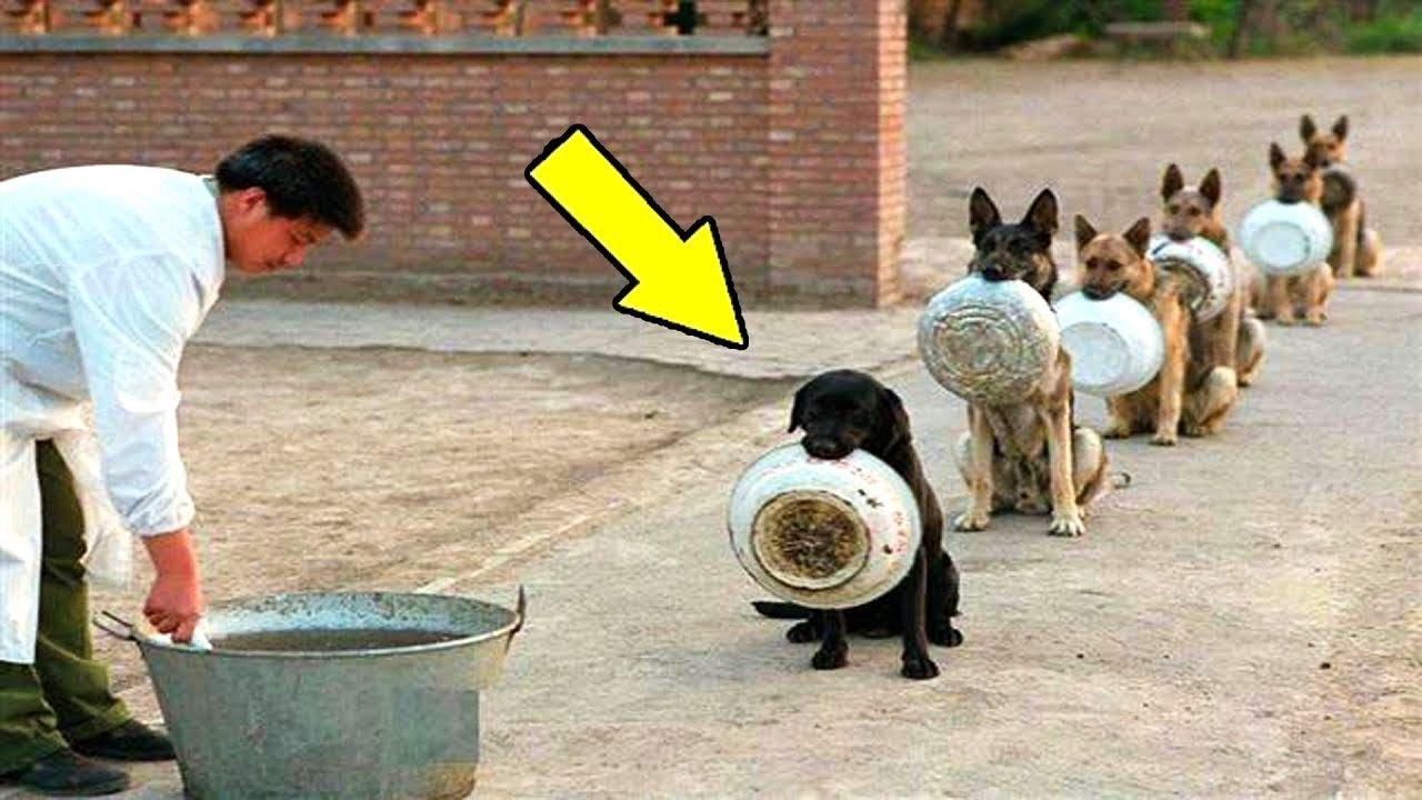 এর থেকে বুদ্ধিমান কুকুর আপনি আর কোথাও দেখতে পাবেন না | The Most Disciplined Dogs in the world Bangla