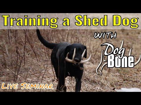 Teaching Dog To Find Shed Antlers: 2019 Seminar
