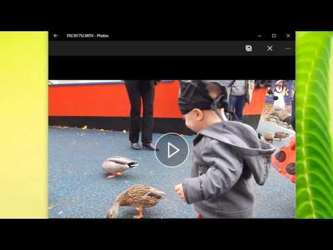 Microsoft picture editor windows 10