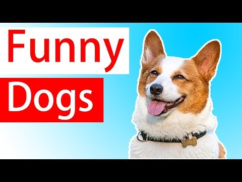 Best Funny Dogs Videos  | Funny Animals Videos – Try Not To Laugh