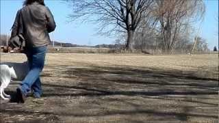 Cobblestone Kennel,dog Training Wisconsin. Ch Lockstep Id Dht,id Iii.