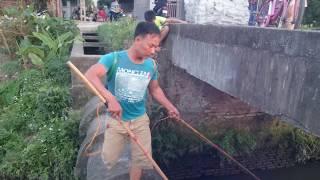 Hát Về Cây Lúa Hôm Nay 2017