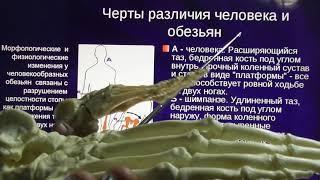 Доказательства деградации древнейшего человека. А. Белов 6. 2. 2021