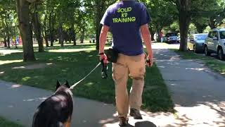 Walking by Reactive Dogs with Jake | Dog Traing Reactive Dogs on Walks