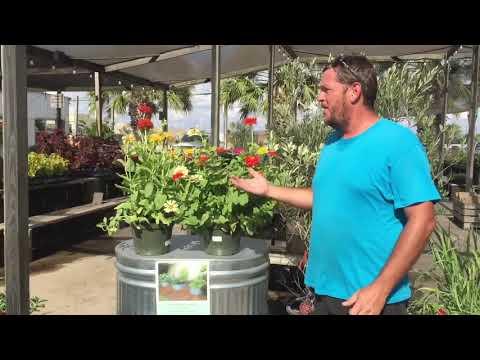 Livestock Water Tank Turned Garden Trough!
