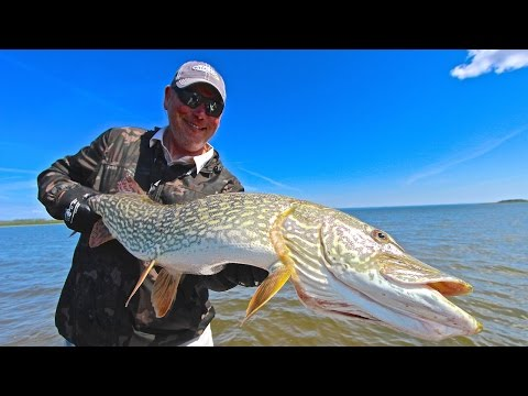 Canada Fishing Guide Episode 1 - Athabasca Giants!