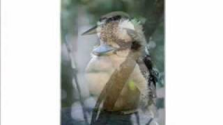 kookaburra song