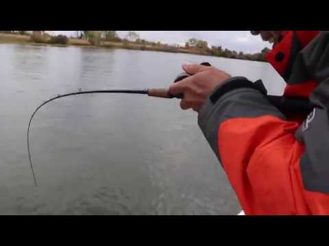 Leisure Striper Slayage - Drifting Live Bait On The Ca. Delta W/Right Hook Sportfishing.