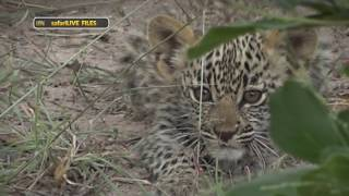 WE introduce you to the royal family of Djuma - Karula, Hosana and Xongile