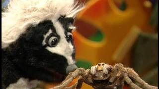 Tarantula - Animal Show with Stinky and Jake - The Jim Henson Company