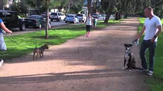 The Good Dog Minute 2/17/13 How We Transform Dog Aggression/reactivity In Minutes!
