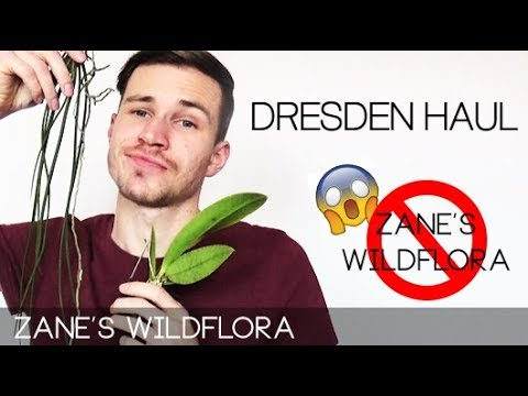 Dresden Orchid Haul + My Channel Is Over! (clickbait)