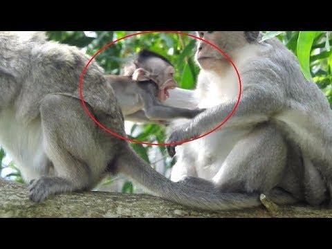 Bravo Mum Get Baby back From Kidnapper ST996 Mono Monkey