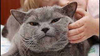 Смешное видео про животных Животные воришки июнь 2016 HD