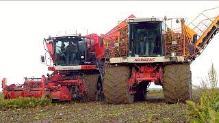 Agrifac Exxact OptiTraxx Suger Beet harvester | Massey Ferguson 6190/3115 | Loonbedrijf Fase