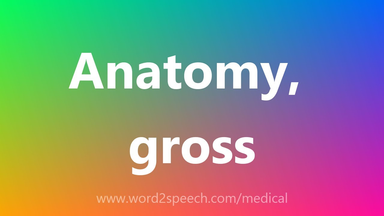 Anatomy, gross - Medical Definition - YouTube