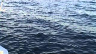 Фильм 5. Рыбалка на Черном море